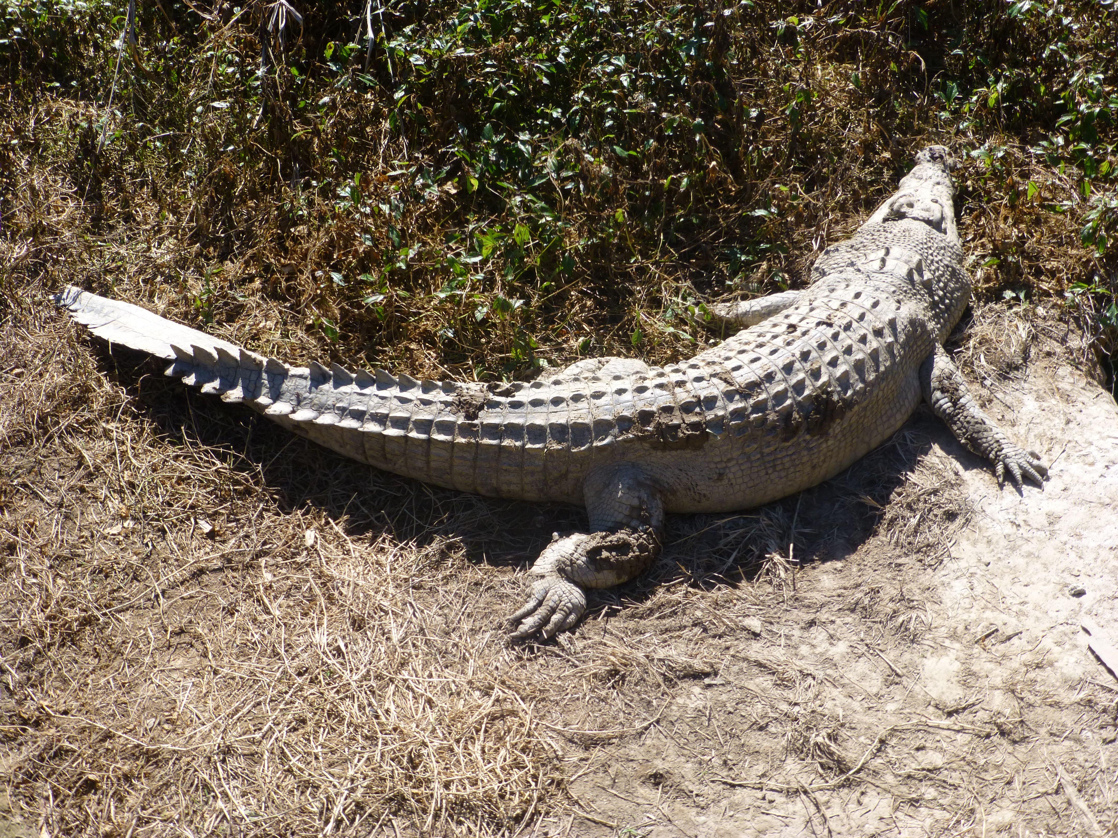 Crocodile nude Nude Photos